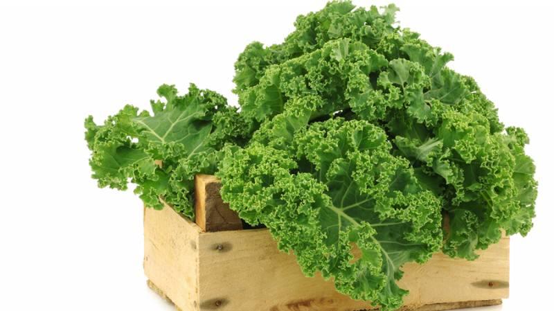 أهم فوائد عشبة نبات الكيل وأضرارها بالصحة.