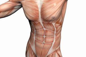 حمية غذائية للتخلص من الدهون وبناء العضلات.