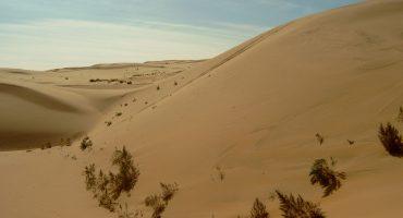 صحراء غوبي