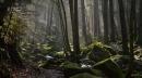 أبرز المعالم السياحية في الغابة السوداء بألمانيا