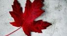 الدراسة في كندا تكاليف المعيشة والدراسة